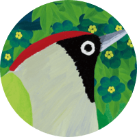 Eurasian Green Woodpecker
